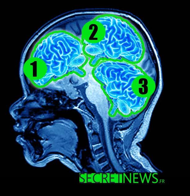 enfant-plus-intelligent-monde-trois-cerveaux-1 L'enfant le plus intelligent du monde possède trois cerveaux et un QI de 379