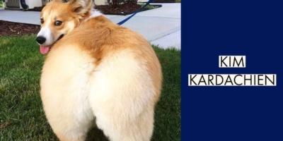 Kim Kardachien : la nouvelle star de l'Instagram canin