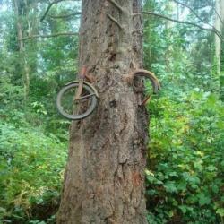 En 1914 un jeune garçon a accroché son vélo a un arbre avant de fuir la guerre. Il n'est jamais revenu le chercher ...