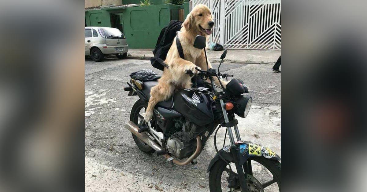 chien-moto-tour-du-monde Universités - La BRI, le Raid et le GIGN vont lancer l'assaut pour libérer le chien pris en otage à Tolbiac