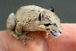 animal-hybride-fake-photoshop-invente-hoax-1-300x202 Zoologie hybride et nouvelles espèces d'animaux