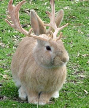 animal-hybride-fake-photoshop-invente-hoax-11-300x361 Zoologie hybride et nouvelles espèces d'animaux