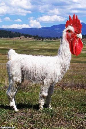 animal-hybride-fake-photoshop-invente-hoax-4-300x450 Zoologie hybride et nouvelles espèces d'animaux