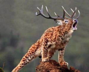 animal-hybride-fake-photoshop-invente-hoax-7-300x245 Zoologie hybride et nouvelles espèces d'animaux