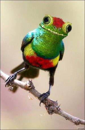animal-hybride-fake-photoshop-invente-hoax-8-300x458 Zoologie hybride et nouvelles espèces d'animaux
