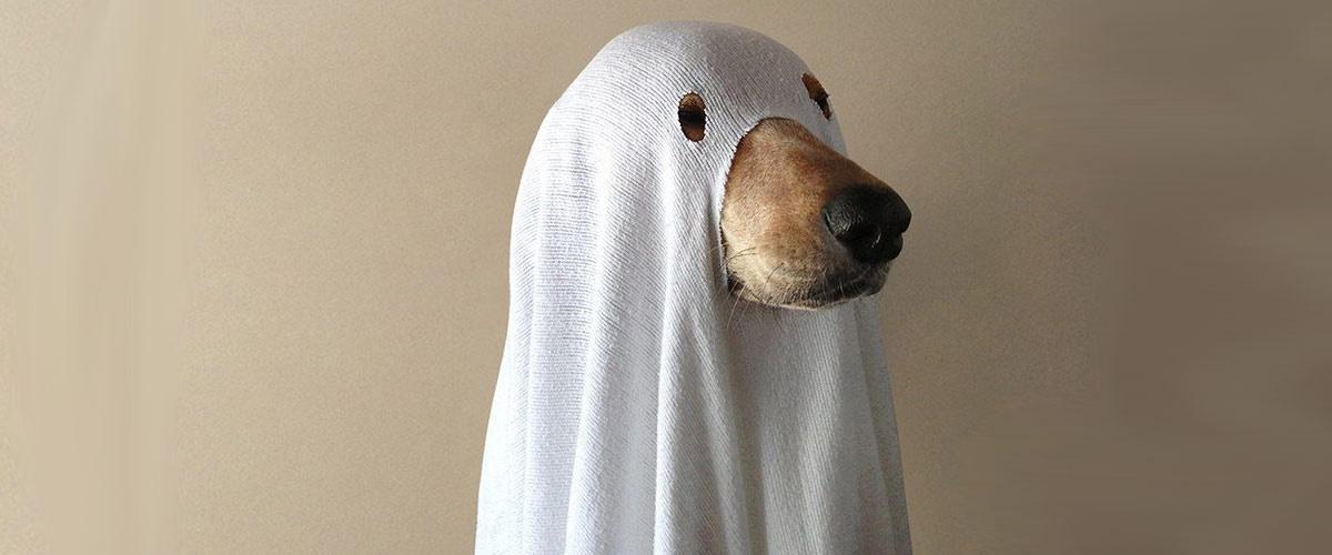 #BlacKKKlansman : Spike Lee a oublié Jack, le chien qui a aidé le policier noir à infiltrer le Ku Klux Klan