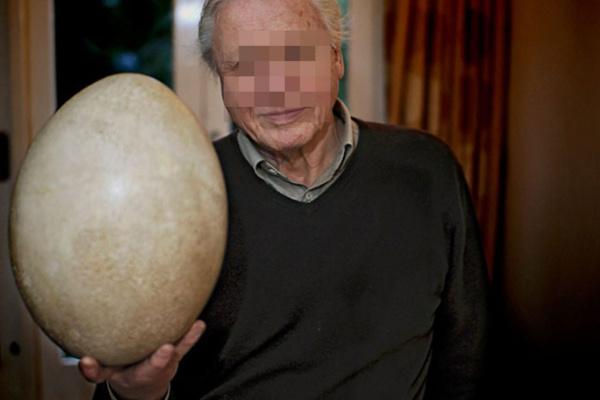 Une poule marseillaise pond un œuf de 7 kilos : un record