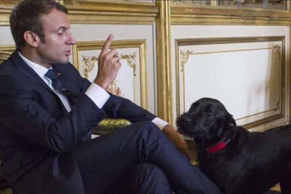 «Tu m'appelles «Votre Majesté» et pas «Wouf»» – Emmanuel Macron recadre et humilie son chien Nemo