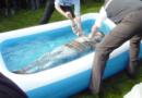 Vacances présidentielles : Macron va baptiser des Français dans sa nouvelle piscine à Brégançon