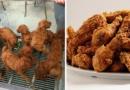 Des nuggets de chiots vendus dans un restaurant chinois à Paris