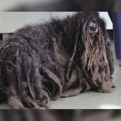 Le chien de Redoine Faïd retrouvé avec des dreadlocks dans une rave party après s'être évadé de la S.P.A.