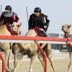 Hippisme : des chameaux remplaceront les chevaux à l'hippodrome de Vincennes